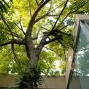 House Around A Tree